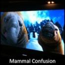 Mammal Confusion