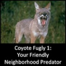 Coyote Fugly: Part 1- Your Friendly Neighborhood Predator